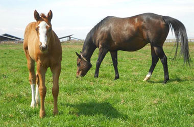 woodbridge_farm_services_foals
